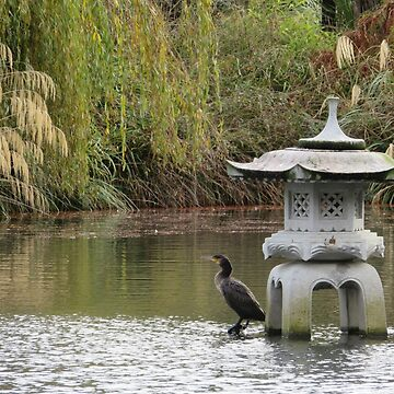 The Cormorant in  the  Japanese Garden by paulm100