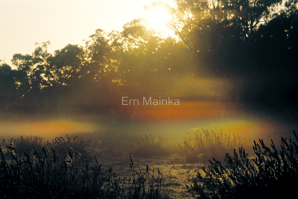 Elfin Glade by Ern Mainka