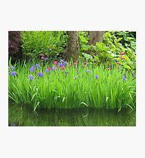 Tranquil  Irises Photographic Print