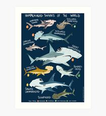 Hammerhead Sharks of the World Art Print