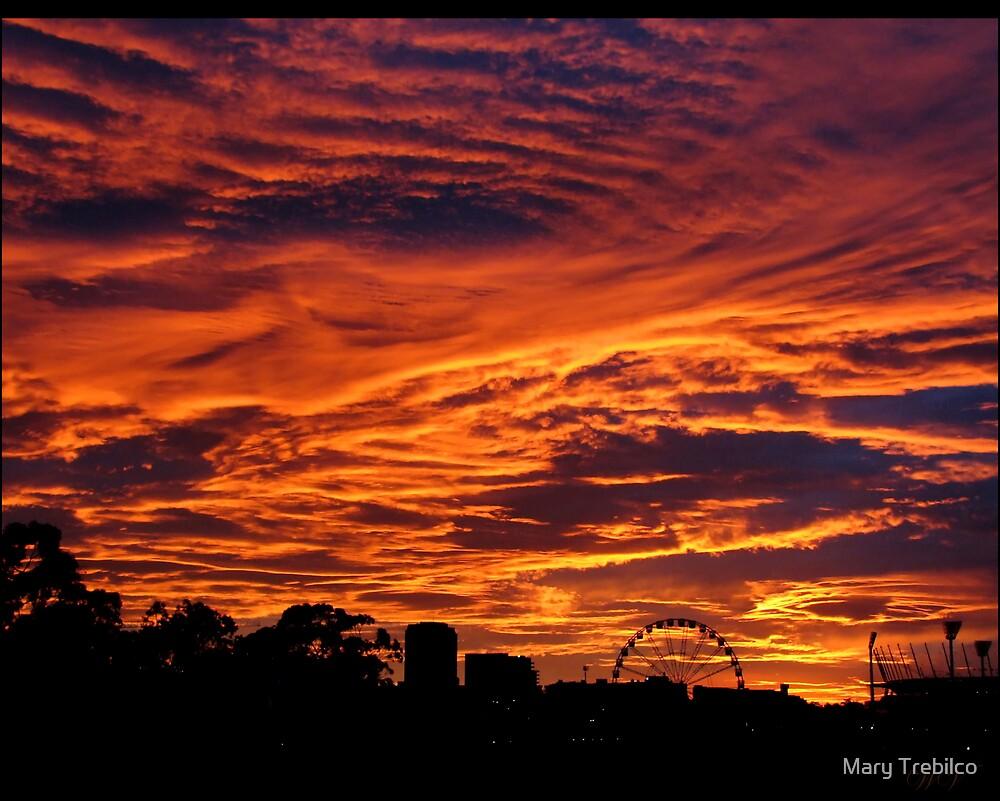 Morning glory... by Mary Trebilco