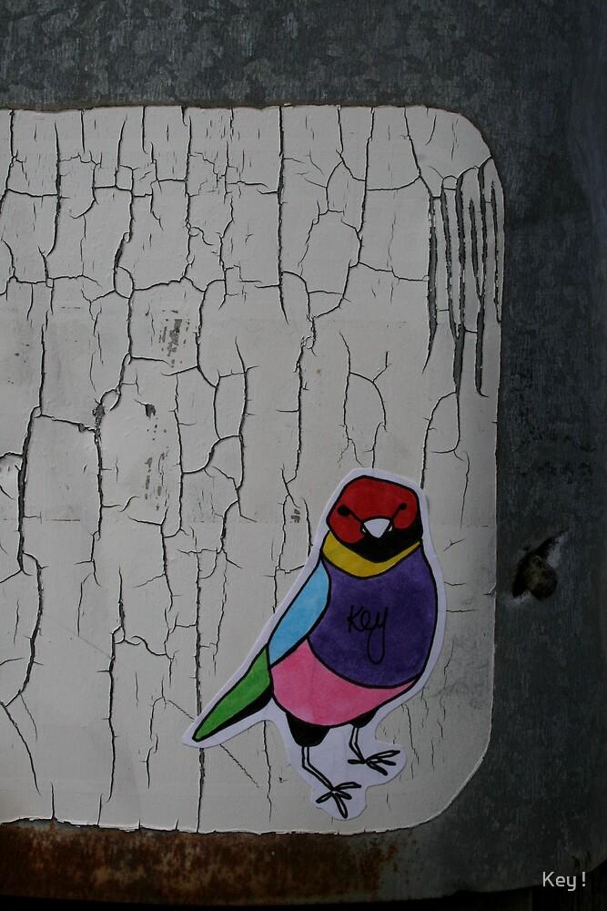 Gouldian Finch by Key !