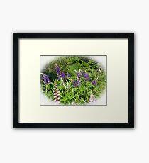 Lupin Garden Framed Print