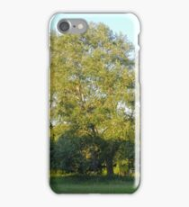 Green Tree on Summer Evening iPhone Case/Skin