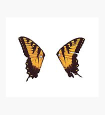 Paramore Butterfly Photographic Print