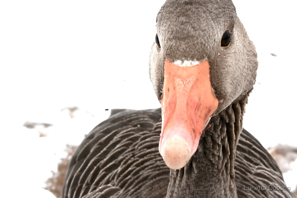 Goose and snow by Lynette Dobson