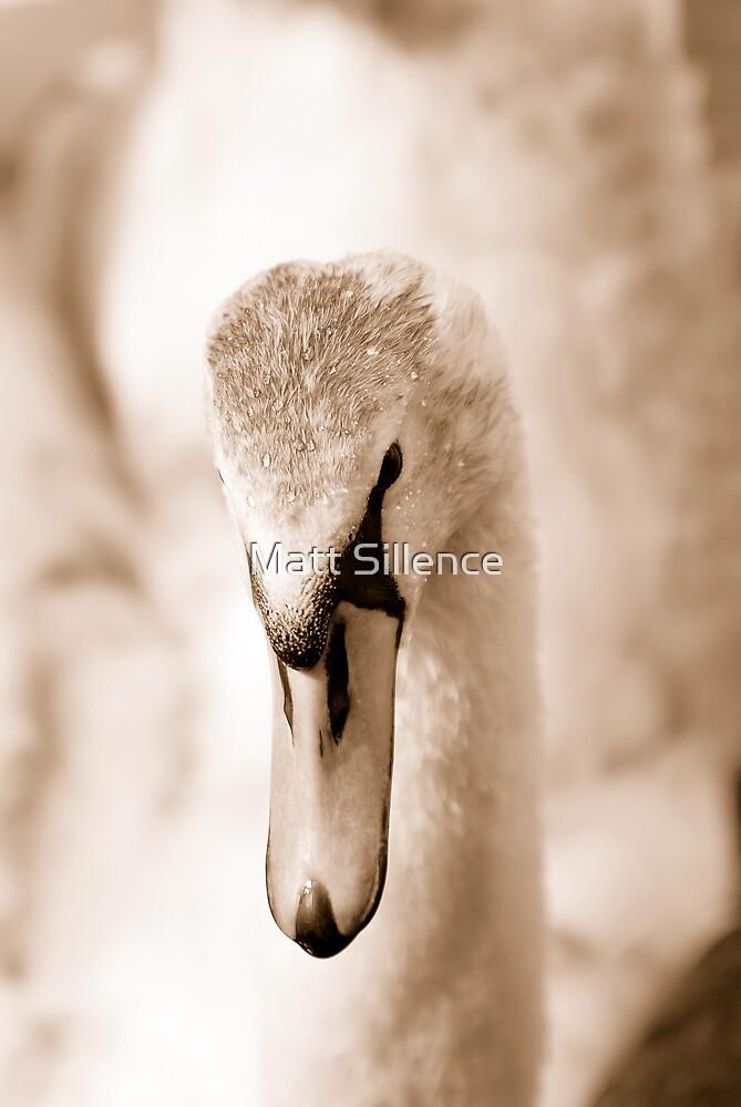 Close-up of a swan by Matt Sillence