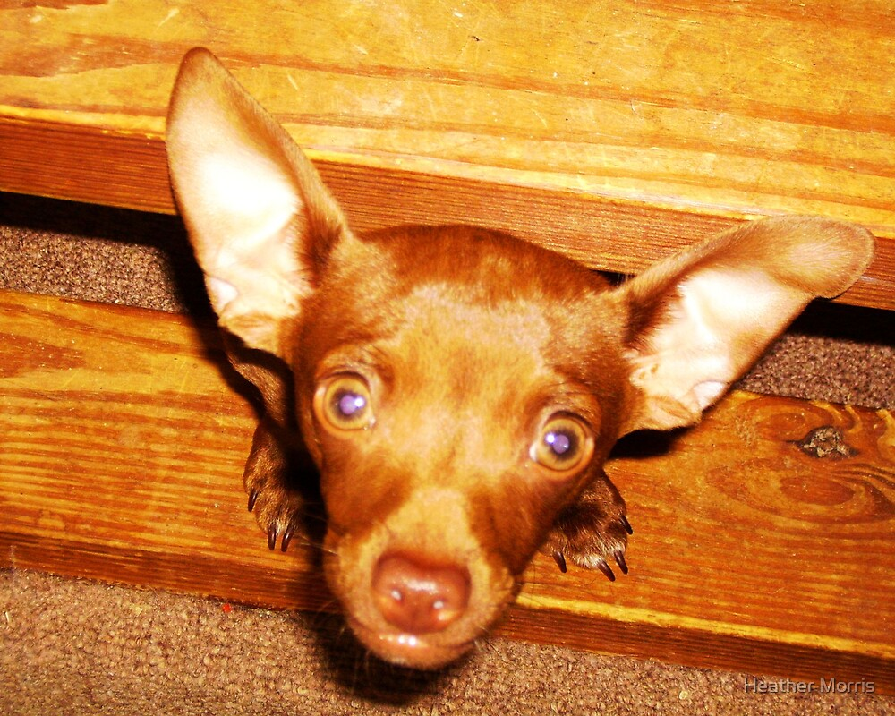 I'm All Ears... by Heather Morris