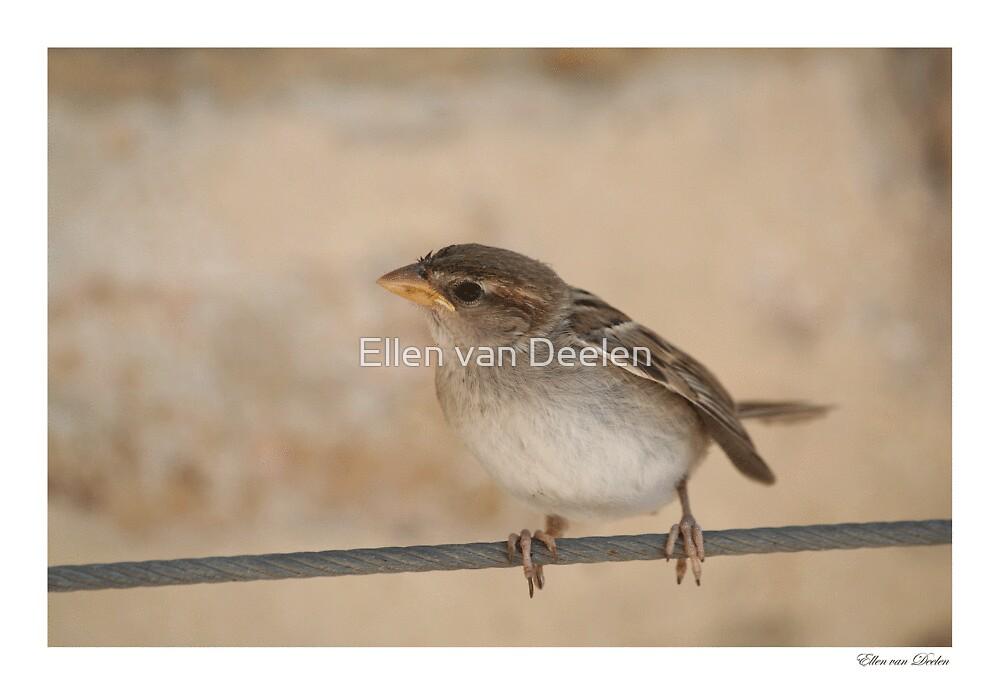 Sparrow by Ellen van Deelen