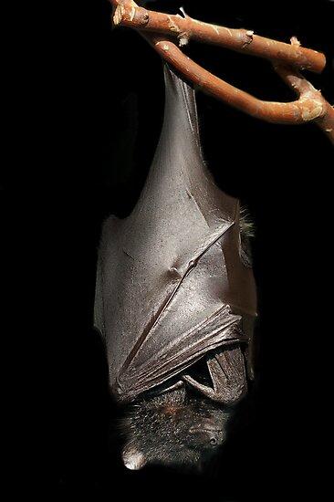 Bat on Black by ApeArt