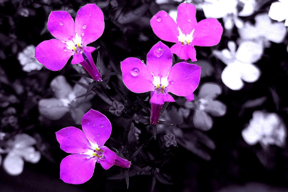 Purple Flowers by Ben Kelly