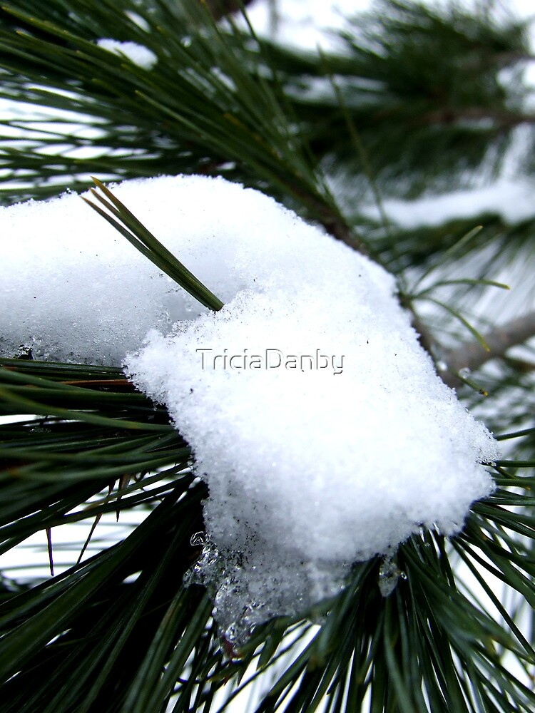 Snow covered by TriciaDanby