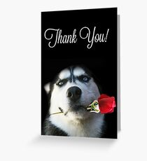 Beautiful and Fun Husky and Red Rose Thank You Card Greeting Card