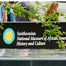 Smithsonian Sign - NMAAHC by ctheworld