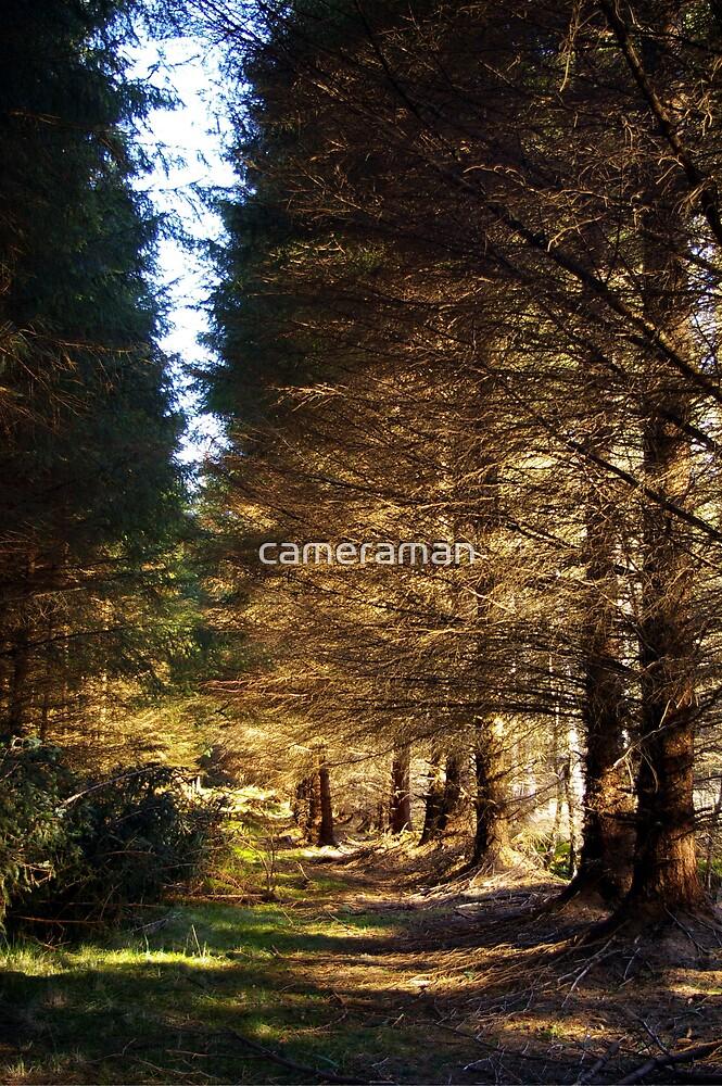 shady forest2 by cameraman
