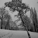 Snow tree by Caroline Cage