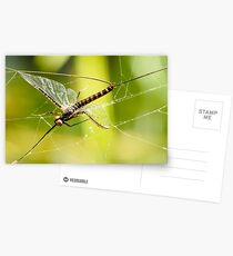 Web Spinner Postcards