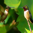 Two Hummers by MaeBelle