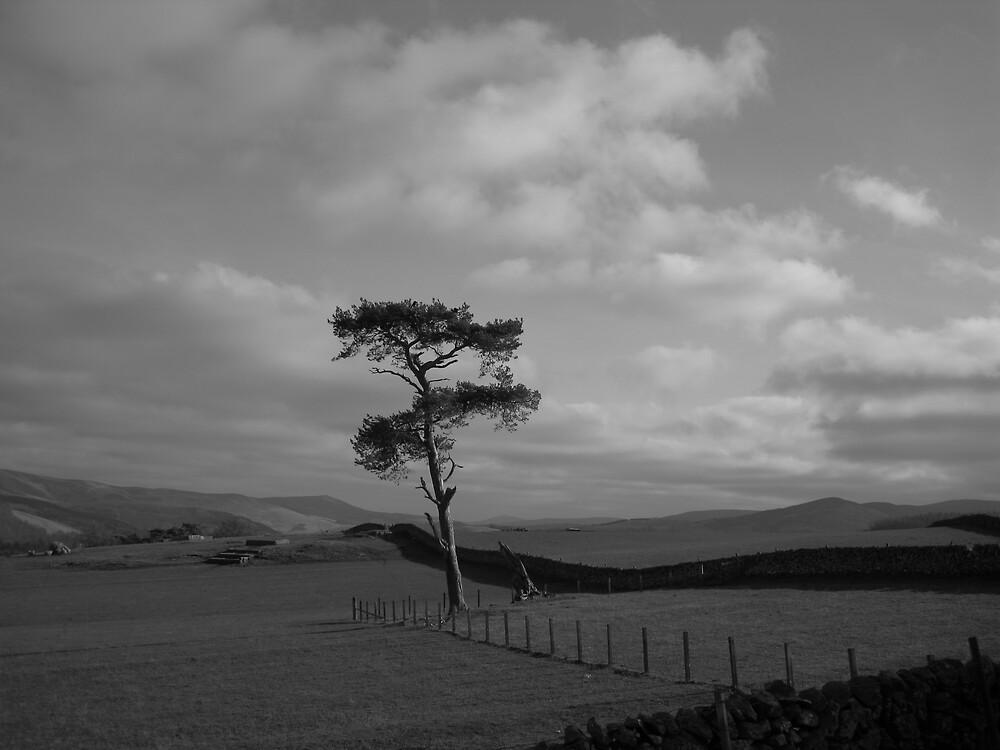 lone tree by flower7027