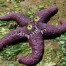 Starfish Squish by GolemAura