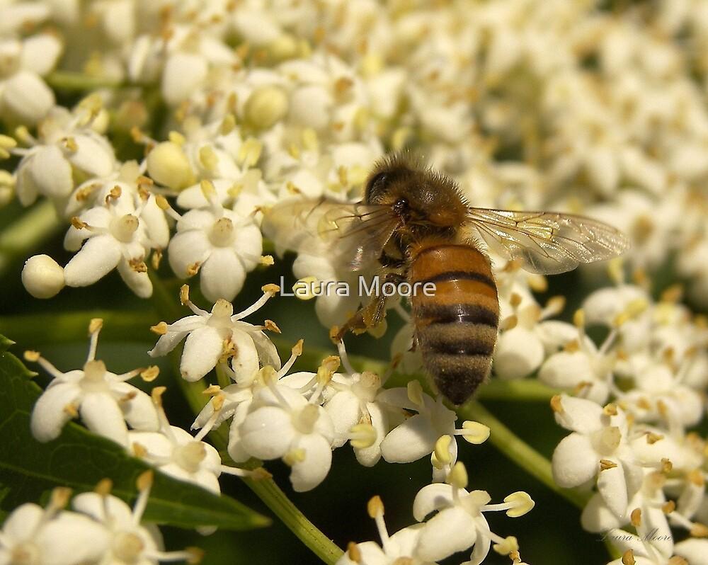 Elder Bee by Laura Moore