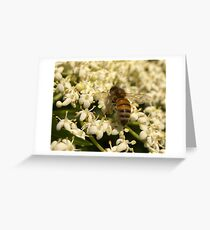 Elder Bee Greeting Card