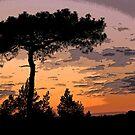 Heathland Silhouette by RedHillDigital