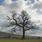 A tree in Farndale by dougie1