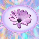 daisy card by picketty