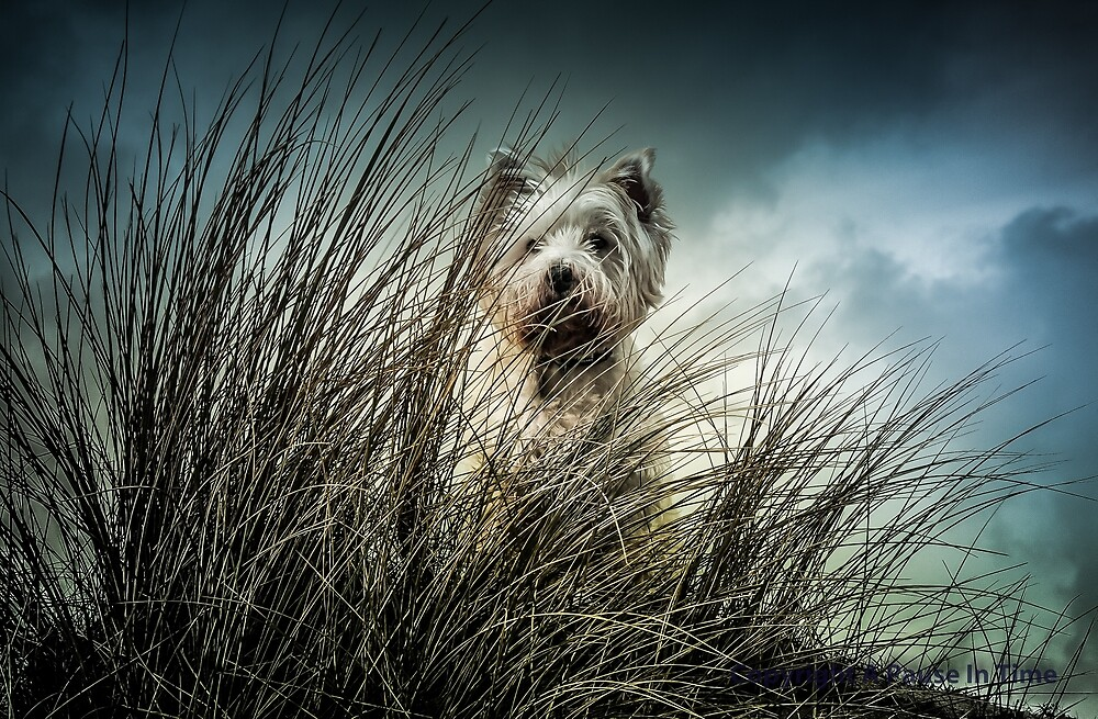 Billy at the Hayle dunes Cornwall...02 by jimmybates