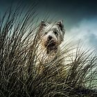 Billy at the Hayle dunes Cornwall...02 by jimmybates