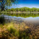 Dead Horse Ranch Park by Randy Turnbow