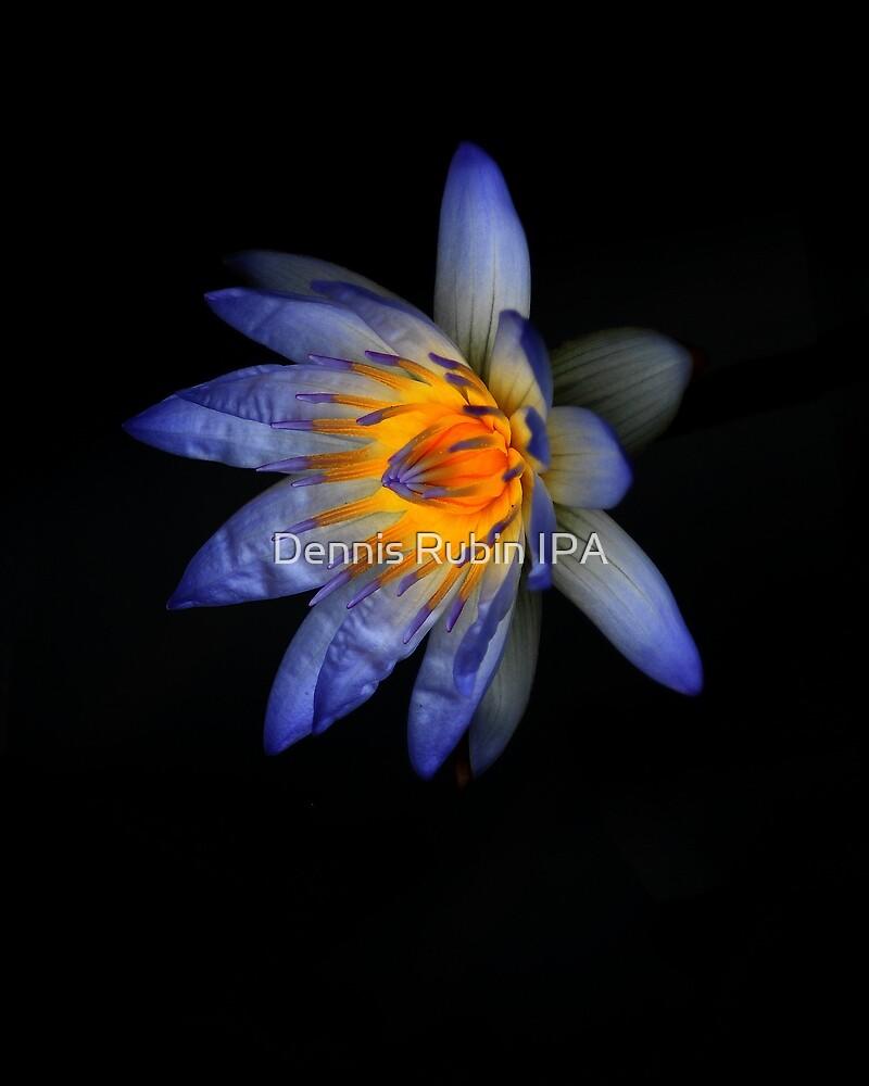 Water Blue by Dennis Rubin IPA