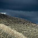 Grey forest by BrainCandy