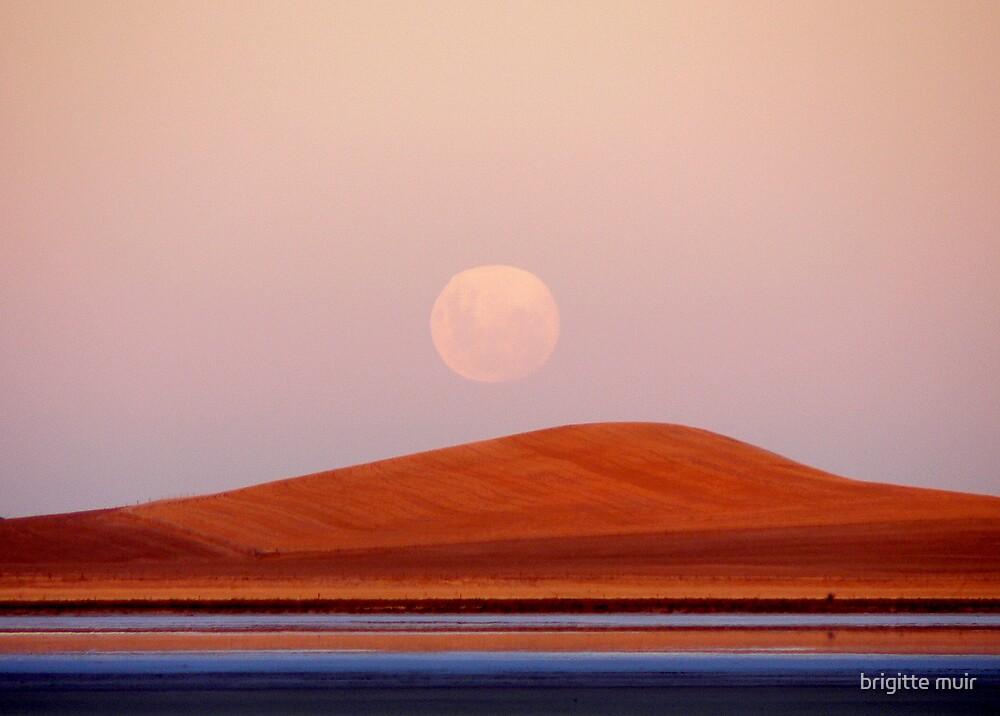full moon in virgo by brigitte muir