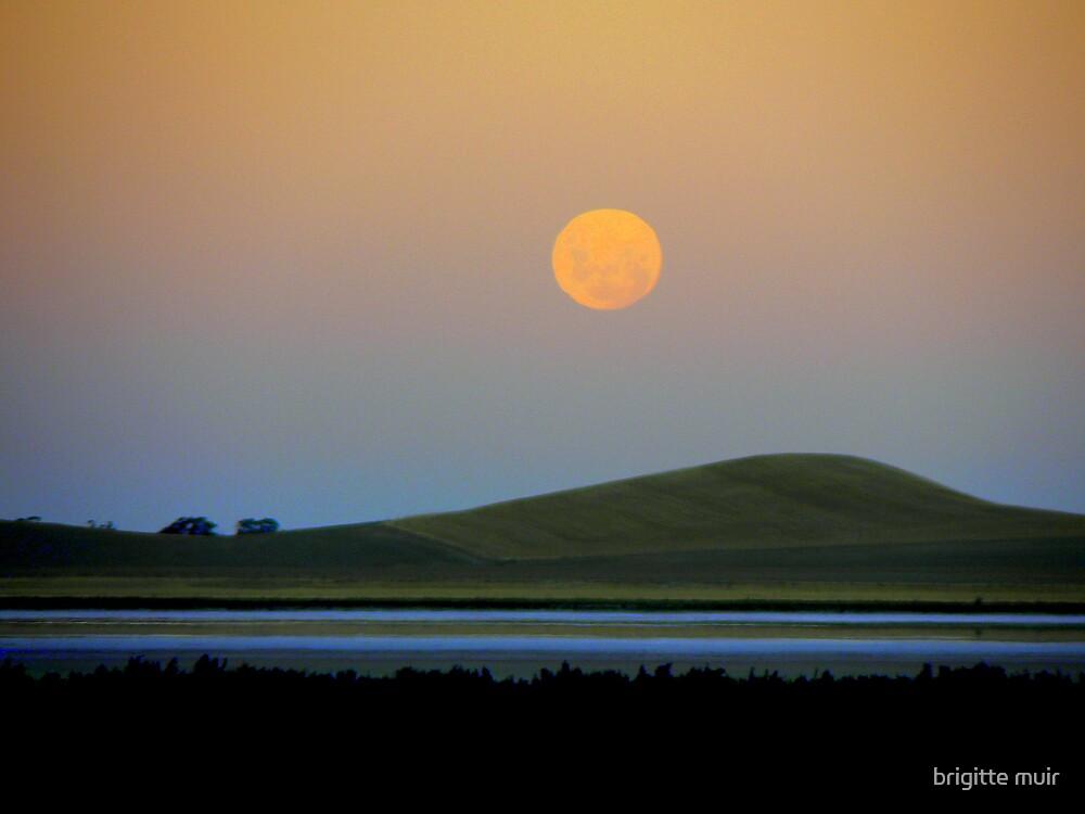 full moon in virgo 2 by brigitte muir