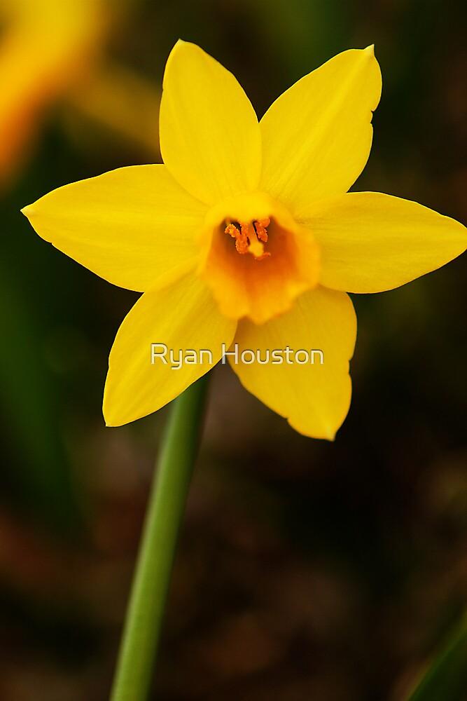 Spring has Sprung by Ryan Houston
