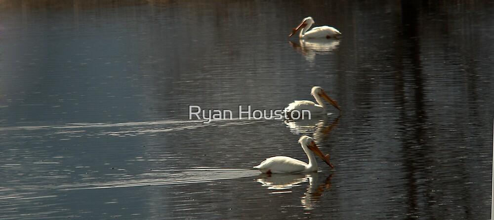 Odd Man Out - White Pelicans by Ryan Houston