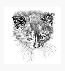 kitten drawing Photographic Print