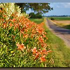 Blooms Along the Road by Sheryl Gerhard