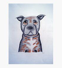 Buffy the Staffordshire Bull Terrier Photographic Print