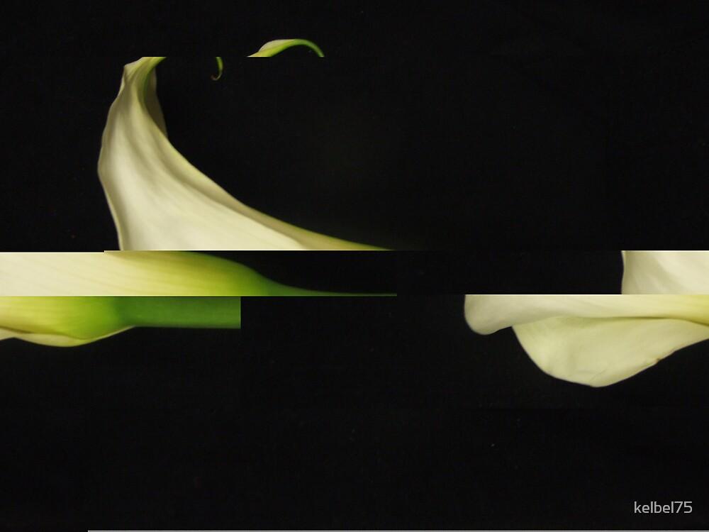 Abstract Cala by kelbel75