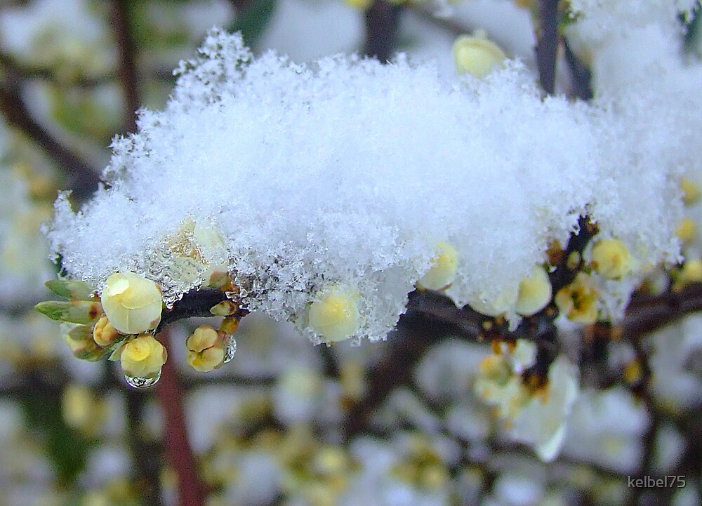 Snow covered by kelbel75
