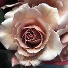 Beauty Unfolding 2 by cjane