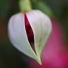 Beautiful Fuchsia Bud Of Winter by Joy Watson