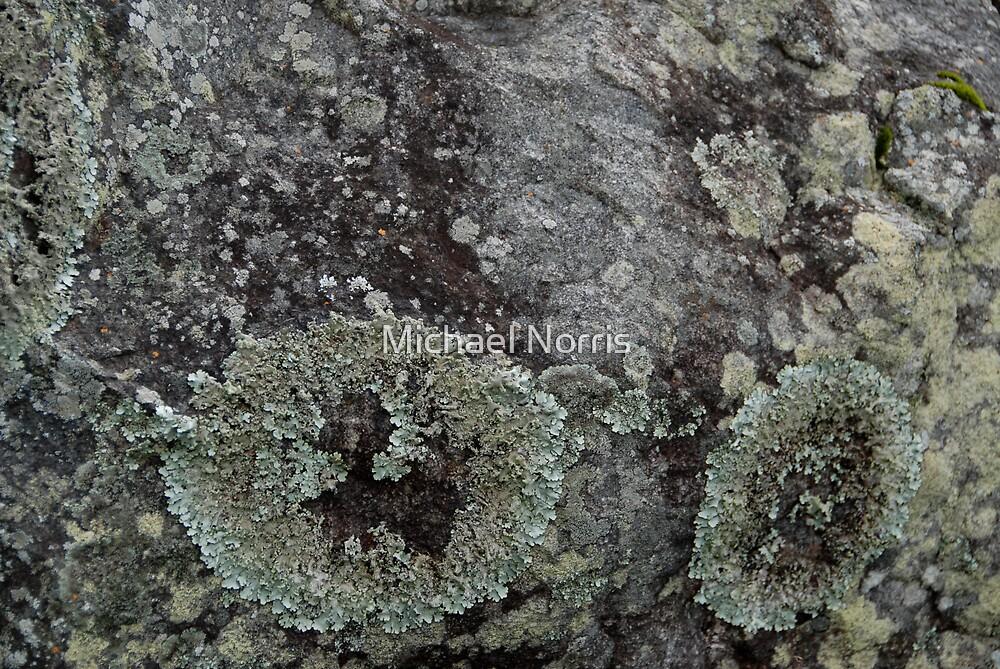 Bush Rock by Michael Norris
