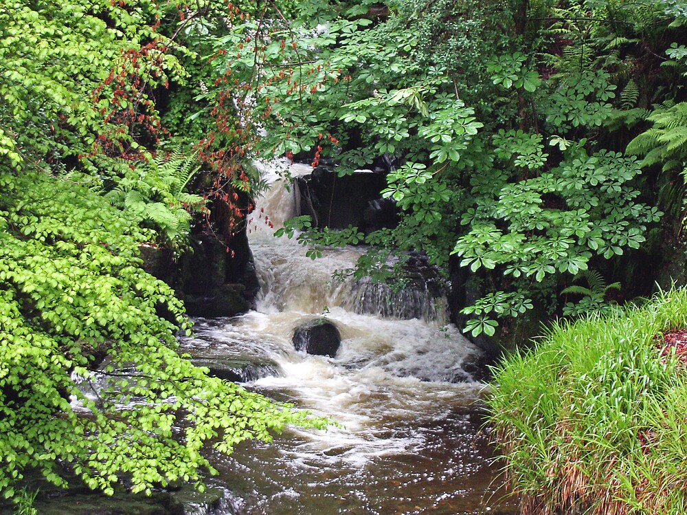 Isle of Man - Waterfall woodland by Bilgolaj