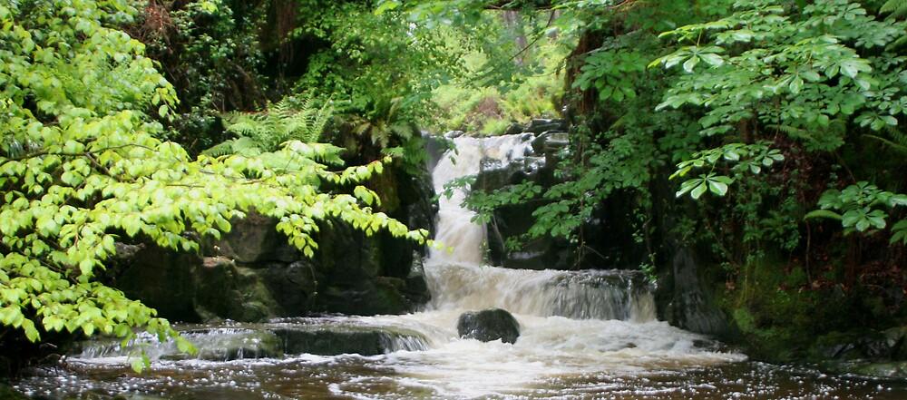 Waterfall Woodland 2 by Bilgolaj