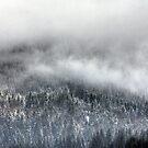 Rolling Fog by hynek