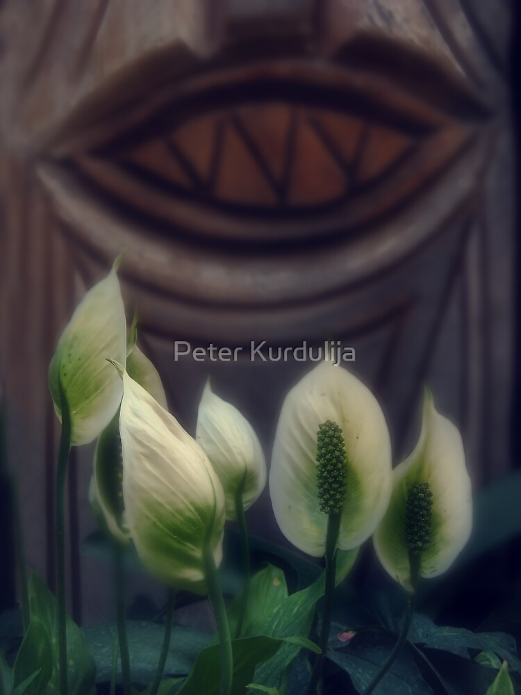 White Flowers for a Wooden Smile by Peter Kurdulija